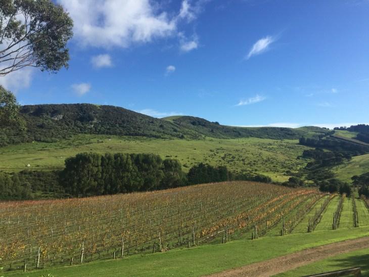 SRVineyard_WaihekeIsland_NZ_LynchAshley_Weather1