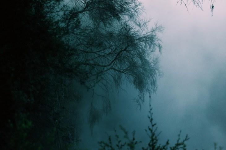 foggy view rotorua lakeside hike