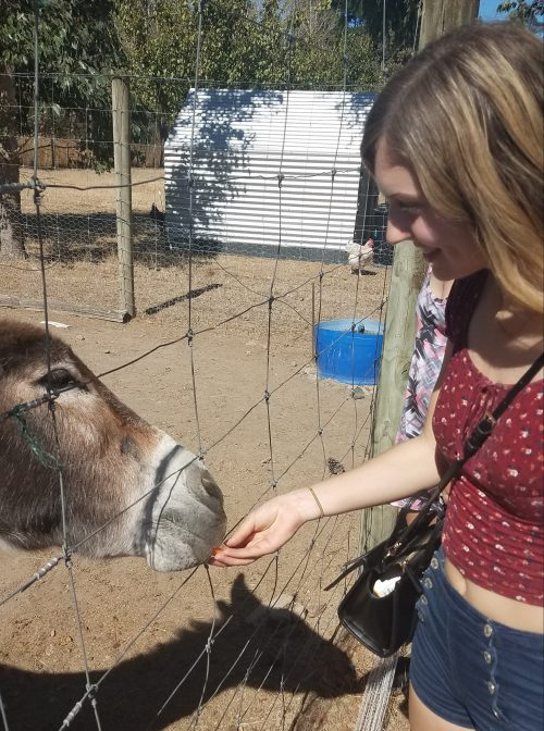 feeding a donkey in wellington new zealand