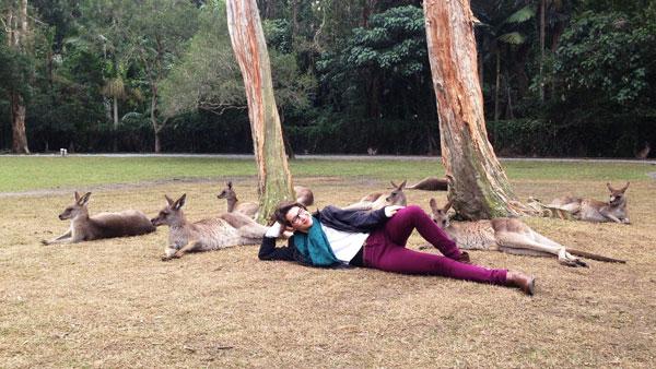 Kangaroos at the Currumbin Wildlife Sanctuary.