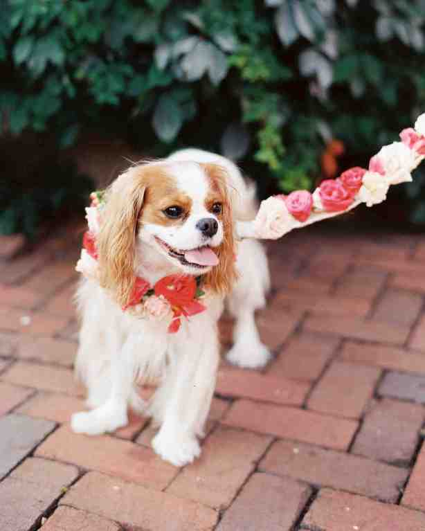 spring wedding inspiration and ideas dog with flower leash nancy ray photography studio i do