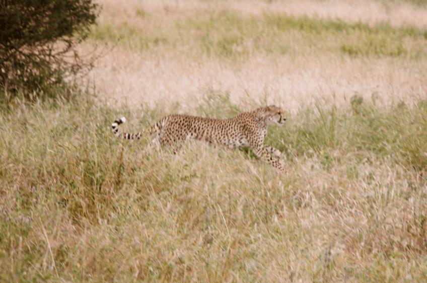 Tanzania Abroad101