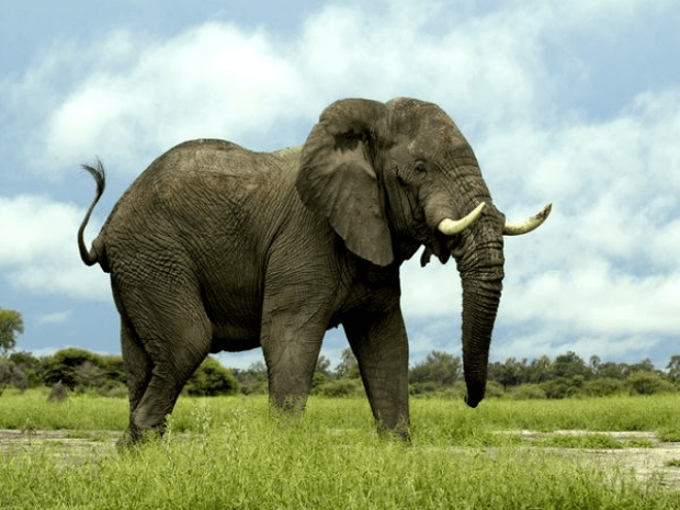 image of elephant