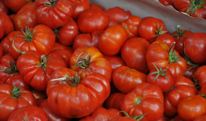 tomaten bak sicilie