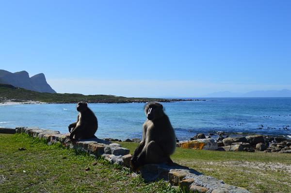 Zuid Afrika Bufels bay