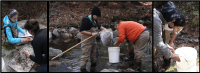 Environmental Studies students working in a stream with nets and buckets