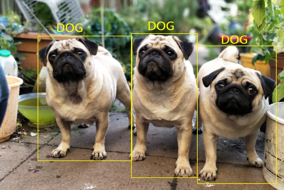 dogs annotated with labels depicting the way supervised learning