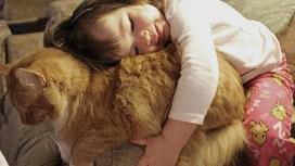abrazo niño a gato