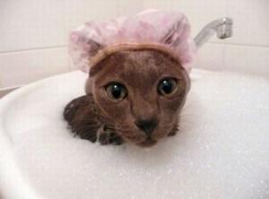 gato-gorro-ducha