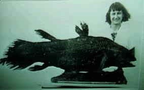 Coelacanths