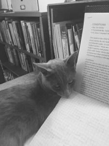 cat in study
