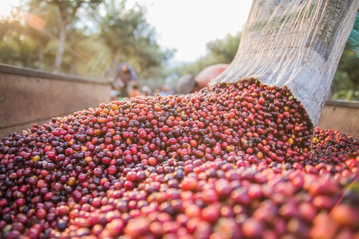 Guatemala-Antigua-fruit.jpg