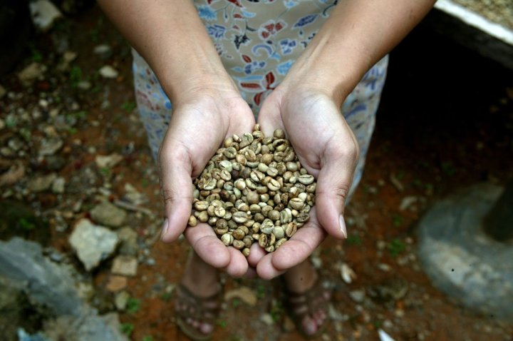 Sulawesi-green-beans