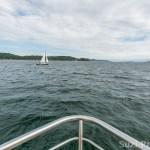 Whalewatching in San Juan Islands
