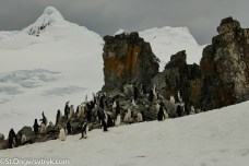 These Chinstrap Penguins make a home at this rookery here on the NE corner of Half Moon Island