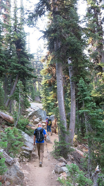 bosque-trekking