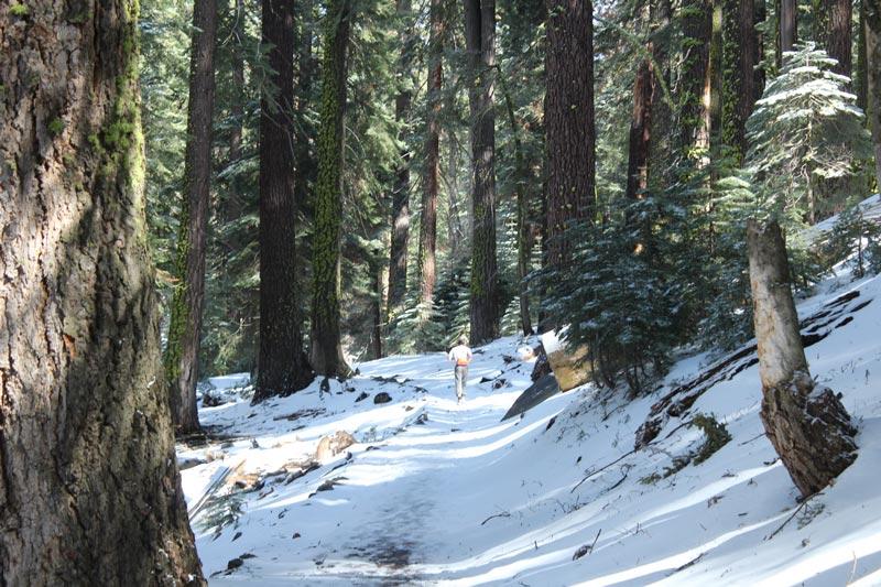 Me gusta trotar y siempre soné en este panorama para correr... nieve, arboles, bosque y buena cuesta