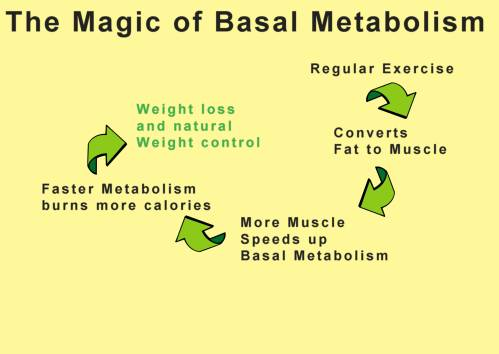 magic-of-basal-metabolism