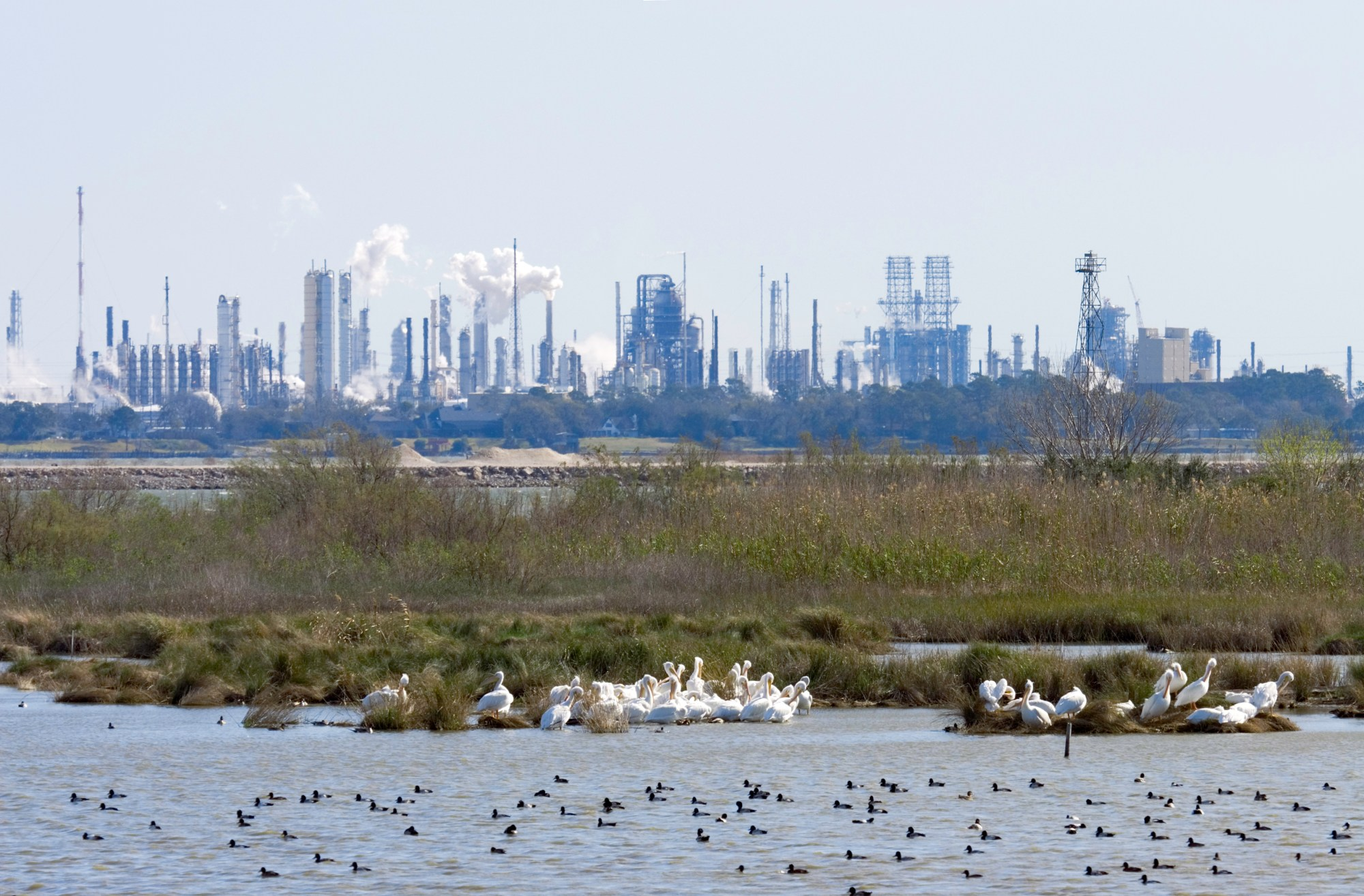 White Pelicans, ducks, marsh and a process plant. Shot at San Jacinto Monument Park near Houston, Texas.