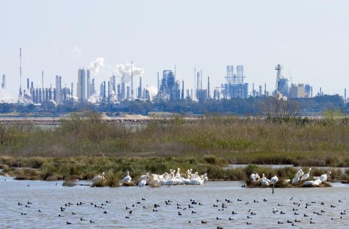 White Pelicans, ducks, marsh and a process plant. Shot at San Jacinto Monument Park near Houston, Texas.