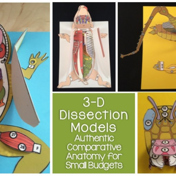 Why You Should Be Using 3-D Paper Dissection Models for Life Science and Biology