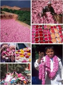 Moroccan Rose Festival
