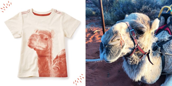 Photoreal Camel