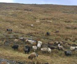 Shetland Islands Highlands