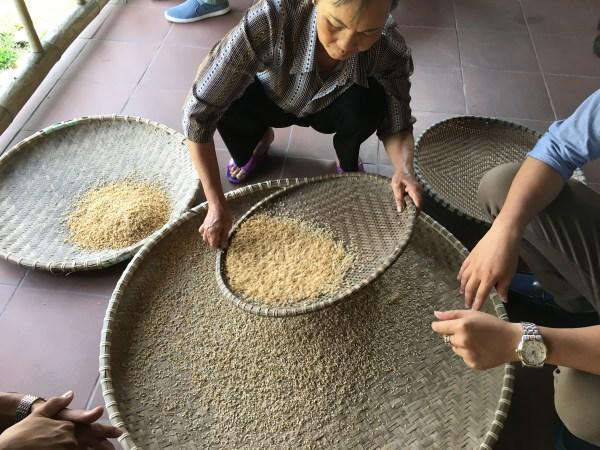 Sifting through rice
