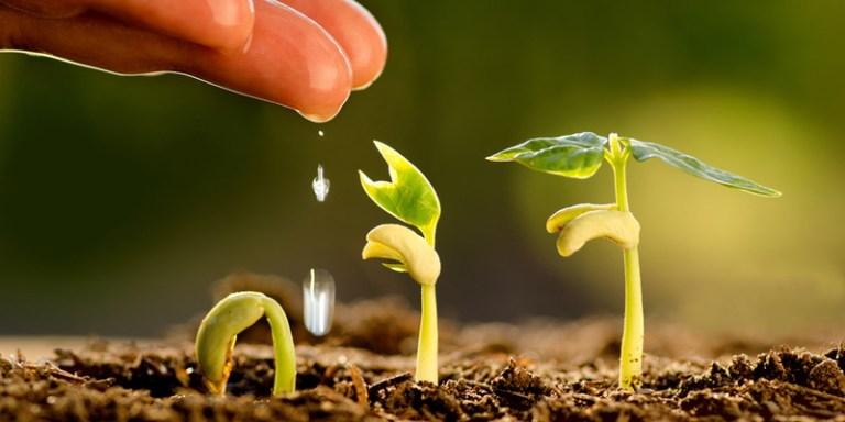 Startup Sustainability 101:  Get Ramen