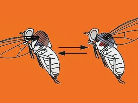 7 talks about fruit flies