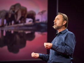 Celebrate the sacred cave: Frans Lanting at TED2014