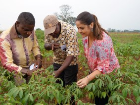 Avoiding the hunger season: How a TED Fellow is working to save African cassava from whiteflies