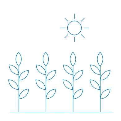 Sun shining on plants