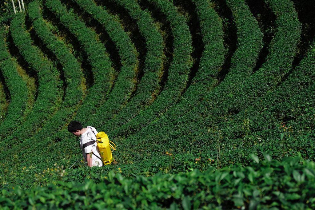 A farmer walking through crops