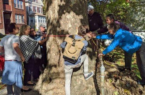 Group of volunteers measuring a tree trunk