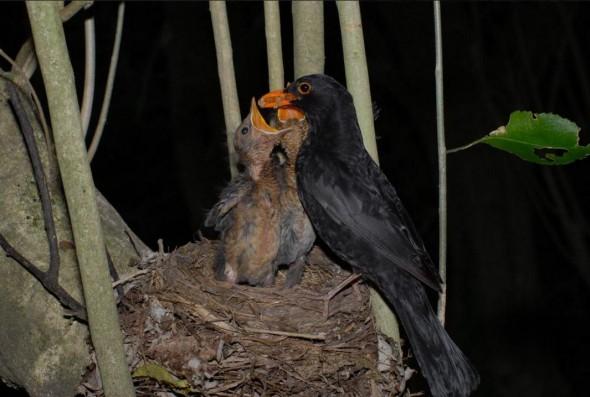 Te Papas Blog Meet The Photographers Of NZ Birds Online 2 Peter Reese