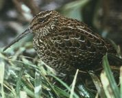 extinct birds from New Zealand a diverse menagerie unfortunately left