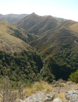 The Scenic Reserve in the foothills of Mount Nimrod / Kaumira was an interesting collecting site and a good walk. We were only an hour and a half late. Near Waimate. Photo Leon Perrie. © Te Papa.