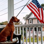 Dog sitting near an American flag