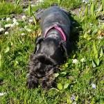 Dog sleeping in grass