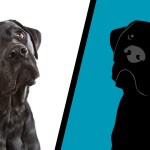 Picture of dog on left; animated graphic of the same dog on right