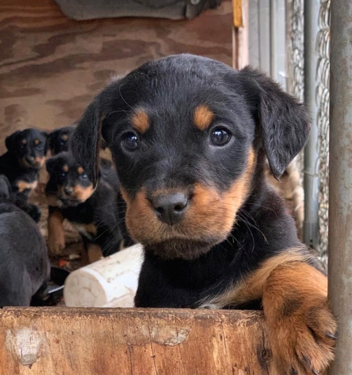 Close-up of puppy with other puppies in the background