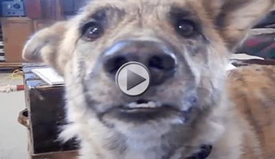 Dog Tease