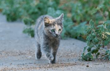 Cat Running