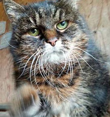 Missan the worlds oldest cat