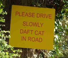 Please drive slowly daft cat in road