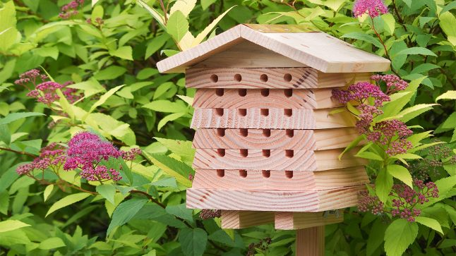 A wooden stacking solitary beehive from Wildlife World is seen in a garden