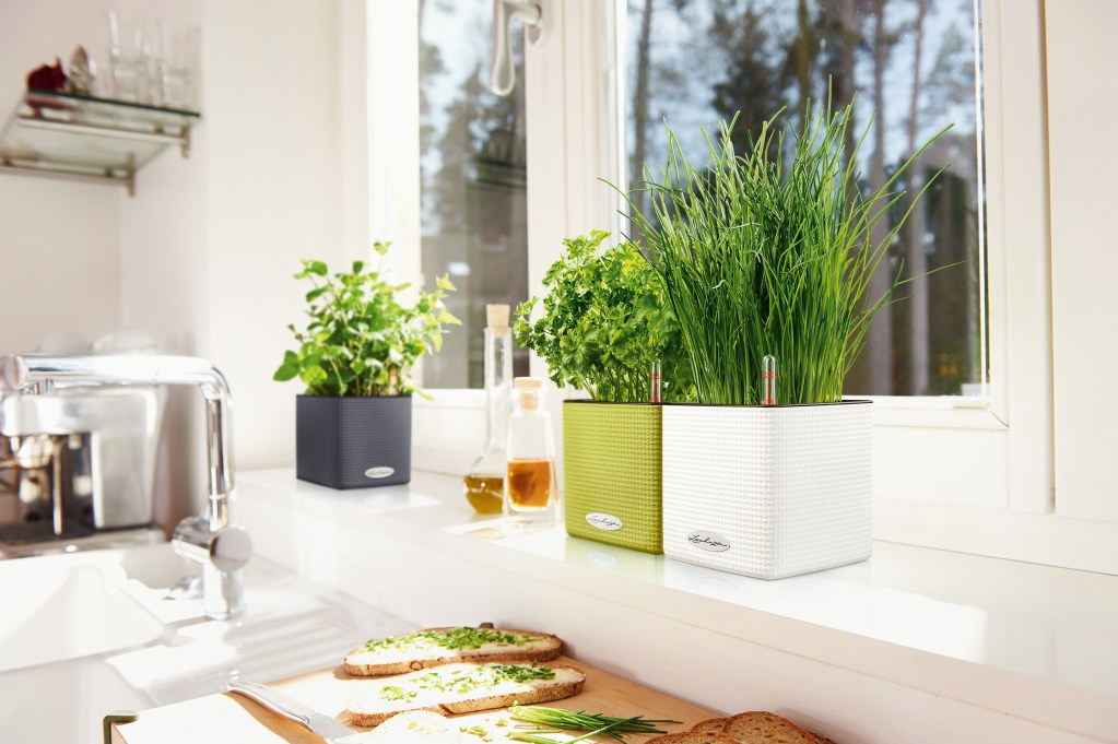 Frsh herbs grow on a kitchen windowsill in Lechuza's self-watering planters