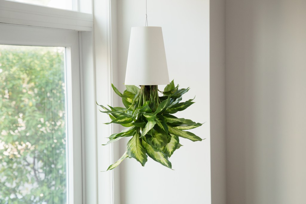 A plant is seen hanging upside-down from a BOSKKE Sky Planter
